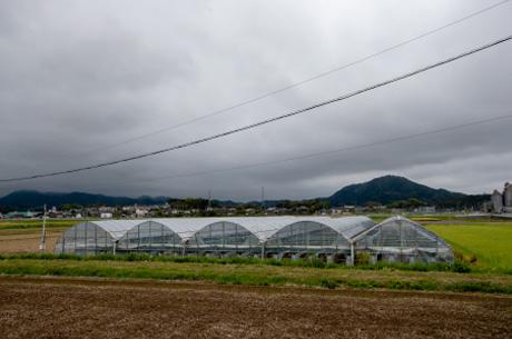 福岡県 あまおうの産地